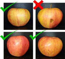 Sorting apples using deep learning.